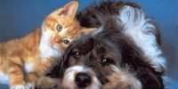 cats-and-dogs - ProKhab.Ru